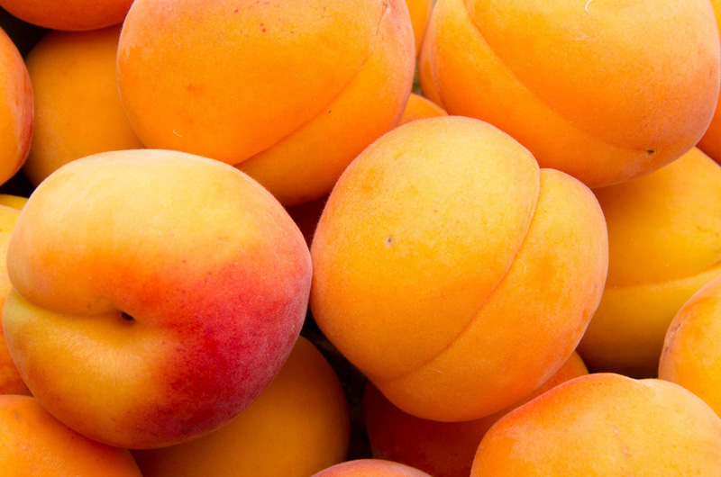 abricots-frais-en-direct-chez-votre-producteur